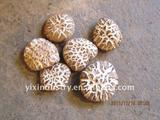 high quality and hotsale white flower shiitake