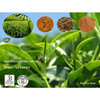 Green Tea Extract Tea Polyphenols 30%~98%; EGCG 30%~98%