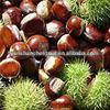 2011 Frozen Roasted Chestnut Kernel (IQF, Peeled)