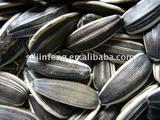 new crop sunflower seeds 5135