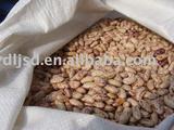 speckled kidney bean