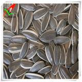 sunflower seed 5009 24/64