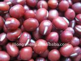 New Crop Small Red Beans