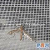 HOT!!! 20*20 mesh 120g /M2 Fiberglass Insect Screen