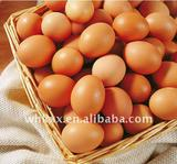 2012 fresh chicken eggs