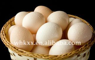 2012 fresh chicken eggs