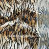 animal printed velboa fabric