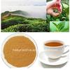 99% TP Green Tea Extract