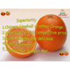 2013 best price navel orange
