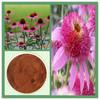 factory price echinacea angustifolia extract powder