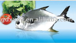 Silver butterfish