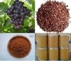 Grape Seed Extract/OPC