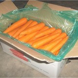 2017 new crops hot sale fresh carrot