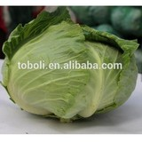 fresh vegetables wholesale cabbage prices
