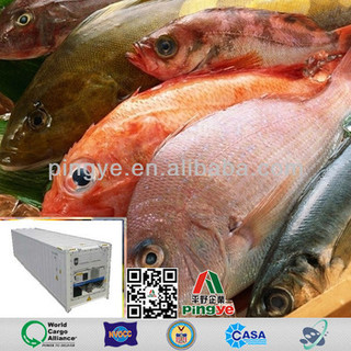 Seafood Reefer Transportation from Zhanjiang