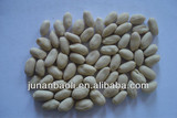 white blanched peanut kernel