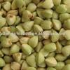 2013 crop buckwheat kernels