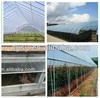hot and new designed uv plastic film greenhouse