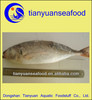 Good sale frozen horse mackerel red tail