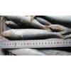 Frozen sardine 7-8pcs/kg
