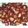 factory chestnuts fresh good organic chestnuts
