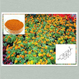 Natural marigold extract Lutein 5%-90% HPLC/UV