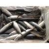 Whole round frozen pacific mackerel for sale