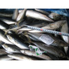 Seafrozen 8-10Pcs chub mackerel pacific mackerel