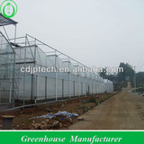 anti-high wind strong structure film greenhouse