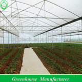 gutter connected film greenhouse