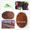 Chinese Grape Seed Extract Powder