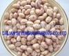 Light speckled kidney beans round type