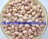 Light speckled kidney beans round type