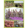 China Super Red Garlic ( best sales)