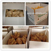 china ginger 2014 new crop fresh ginger