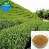 Pure Natural Green Tea Extract / Tea Polyphenol, EGCG