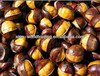 Top Quality Frozen smiling Chestnuts in shell