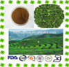 Natural Sweetener Blackberry Extract//Sweet Tea Extract Rubusoside 5%-80%