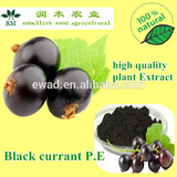 100% Pure natural blackcurrant extract anthocyanin with high quality 25%