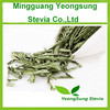 Sweet Stevia Dried Leaf