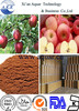 Apple Fruit Extract Powder