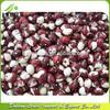 Panda Beans Panda Kidney Beans 2014