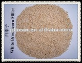 wihte broom corn millet for bird and person food