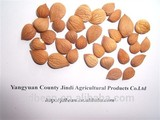 HPS bitter apricot kernels / almond / apricot pit (GF3)