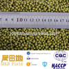 2014 new crop sprouting Green mung bean