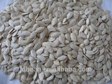 shine skin pumpkin seeds 11mm+, 12mm+ 2014 new croop