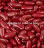 2012 crop Dark Red kidney bean, British type