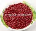New crop Dark Red kidney bean, British type