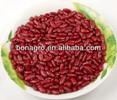 New crop Dark Red kidney bean, British type