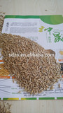 High quality and best quality feed oats